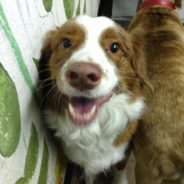 Anesthesia Free Dog Teeth Cleaning in Scottsdale