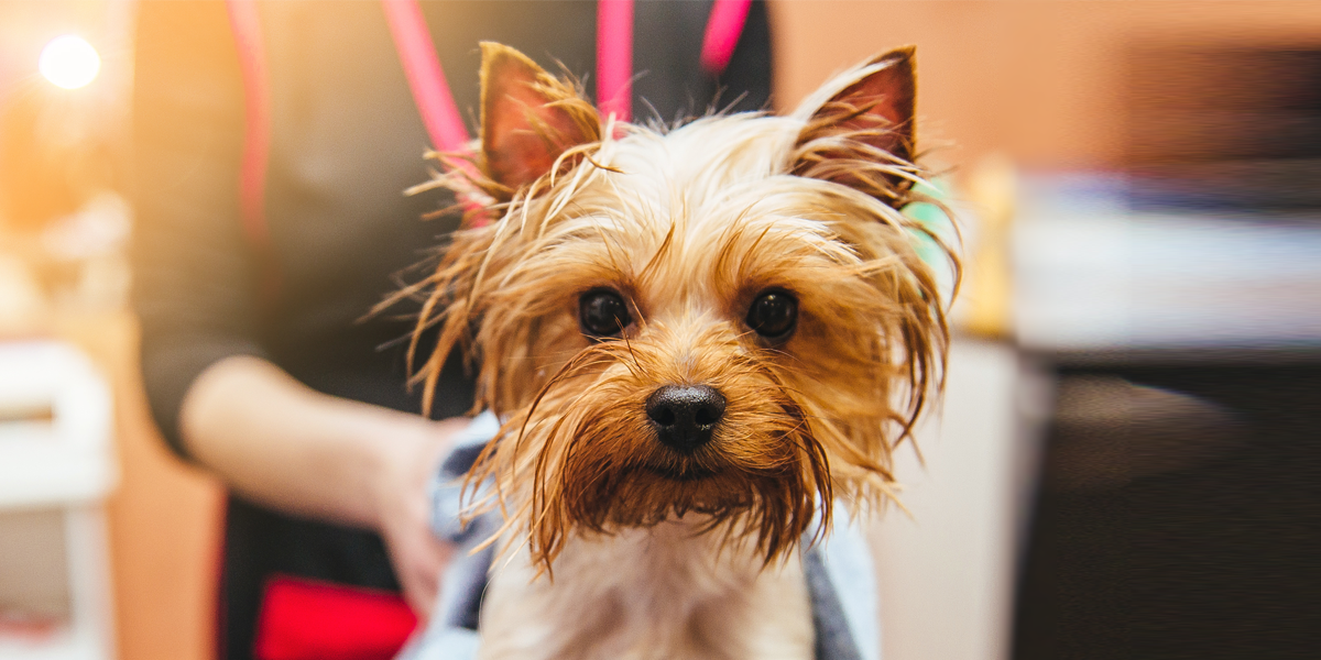 Grooming pets in Arizona